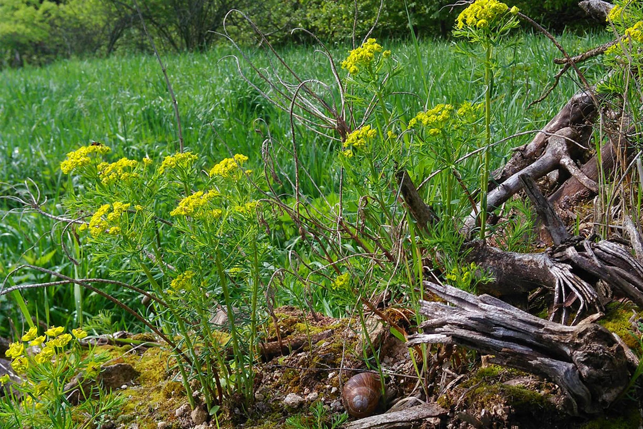 Z ziołami na wiosnę